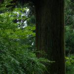 高尾山ハイキング案内